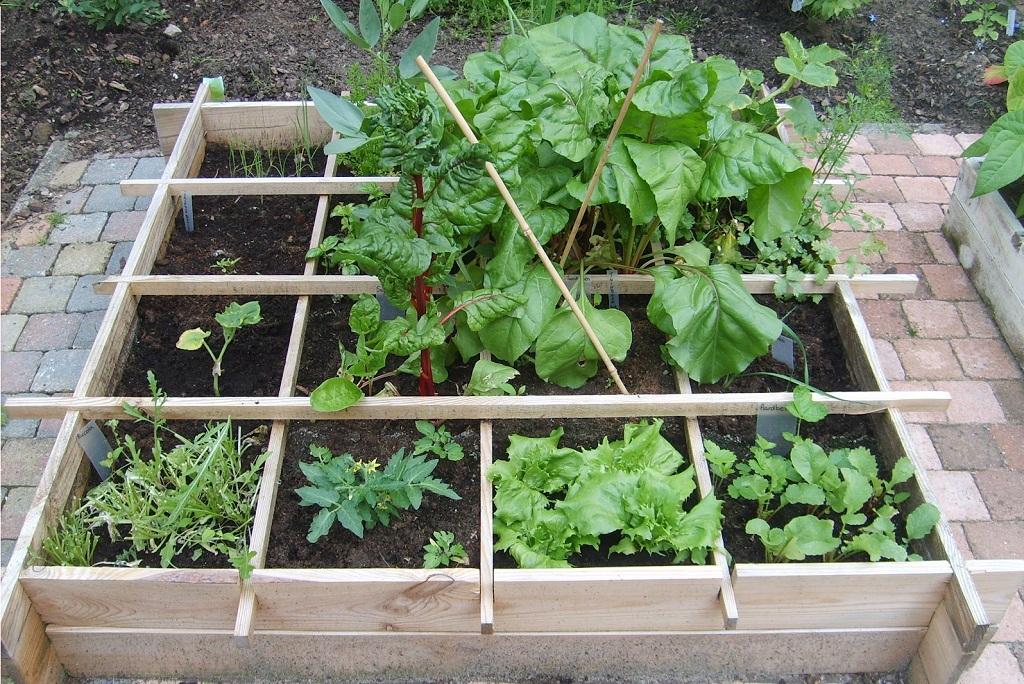 Vierkante Meter Tuin : Vierkante meter tuin stamppot pakket bedrukken voordelig